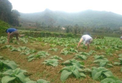 Đoàn lãnh đạo Công ty Cổ phần Ngân Sơn tham dự Hội nghị bàn biện pháp triển khai thực hiện kế hoạch sản xuất thuốc lá vụ Hè thu năm 2012 tại tỉnh Lào Cai