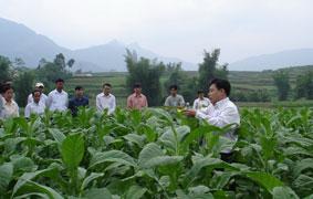 Ðầu tư phát triển vùng nguyên liệu góp phần xóa đói, giảm nghèo