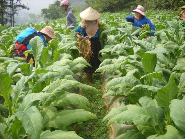 Công ty Ngân Sơn góp phần xóa đói giảm nghèo cho nông dân từ hoạt dộng sản xuất kinh doanh
