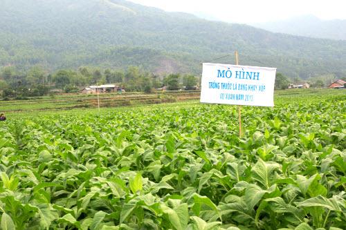 Ngân Sơn hội thảo tổng kết mô hình trồng cây giống thuốc lá bằng khay xốp