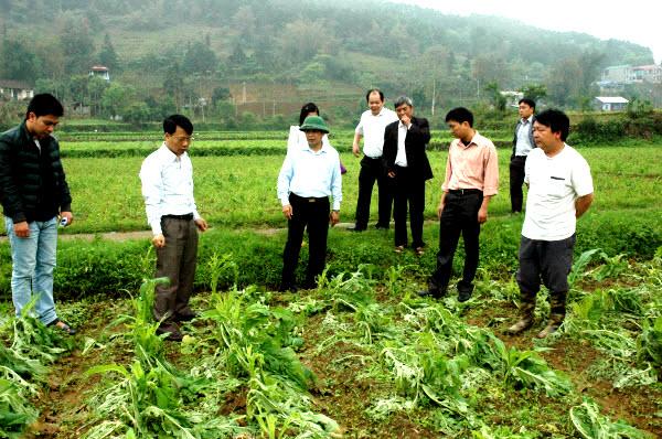 Tích cực khắc phục cây trồng ảnh hưởng bởi mưa đá